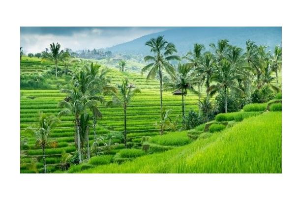 Staatsbezoek & handels- missie met koningspaar naar Indonesië.